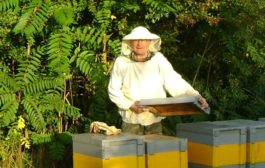 Profi partner a méhészeti termékek gyártásában