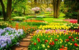 Bízza a kertészkedést egy elismert, megbízható vállalkozásra!
