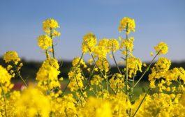 A mezőgazdaság kiszámíthatatlansága