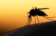 Megnehezítik életét a szúnyogok és rovarok?