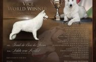 A svájci fehér juhászkutya különlegessége