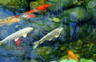 Gondoskodjon a kerti tó tisztaságáról