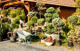 Vigyen új színt kertjébe életerős növényekkel!