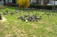 Riassza el a galambokat környékéről!