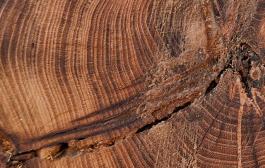 A faanyagok között