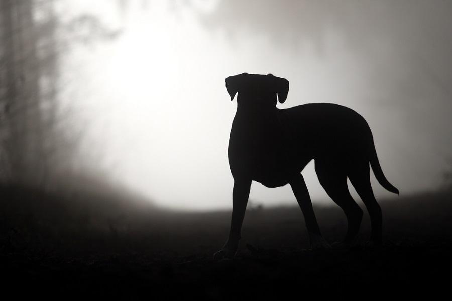 Állathamvasztás országszerte